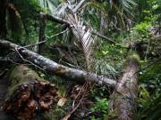 Sturmschaden in Neuseeland