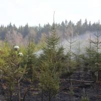 04-04-2016_Biberach_Tannheim_Rot_Waldbrand_Feuerwehr_Poppel20160404_0028