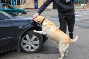 Drogenhund Absuche