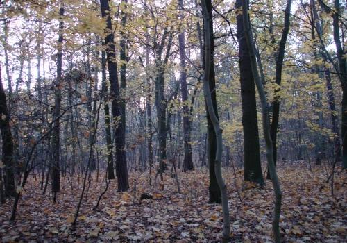Wald, über dts Nachrichtenagentur
