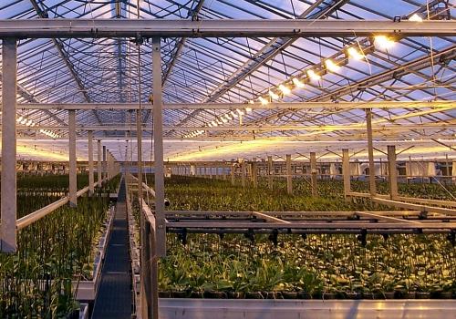 Pflanzen in einem Gewächshaus, über dts Nachrichtenagentur