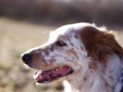 Schner Hund drauen in der Natur