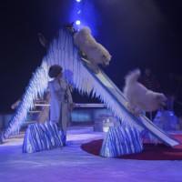 20170601_Memmingen_Circus_Carl-Busch_Poeppel_0104