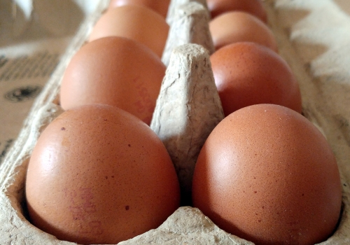 Eier, über dts Nachrichtenagentur