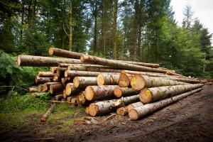 Débardage de Billes de bois dans le Morvan - Coupe de bois pour de la gestion forestière