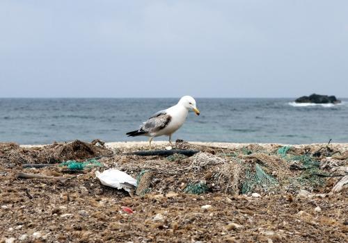 Möwe auf einem Müllhaufen am Meer, über dts Nachrichtenagentur
