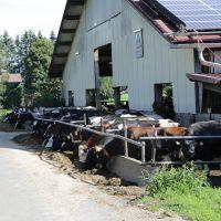 2019-08-09_Unterallgaeu_Groenenach-Tal_Miclhbetrieb_Landwirtschaft_Tierschutz_Polizei_Durchsuchung_Poeppel_0004