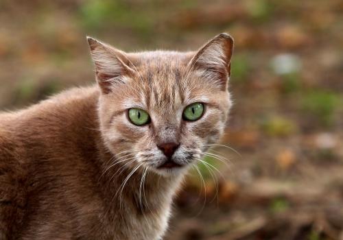 Katze, über dts Nachrichtenagentur