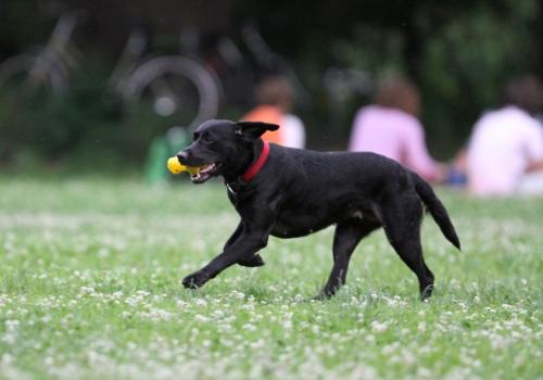 Hund, über dts Nachrichtenagentur