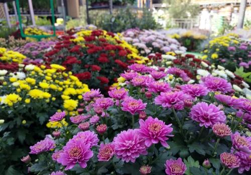 Blumen im Gartenfachgeschäft, über dts Nachrichtenagentur
