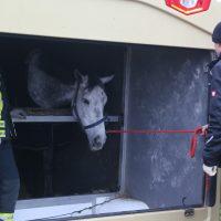 2020-03-10_A7_Dettingen_Berkheim_Unfall_Pferdetransporter_Feuerwehr_IMG_6369