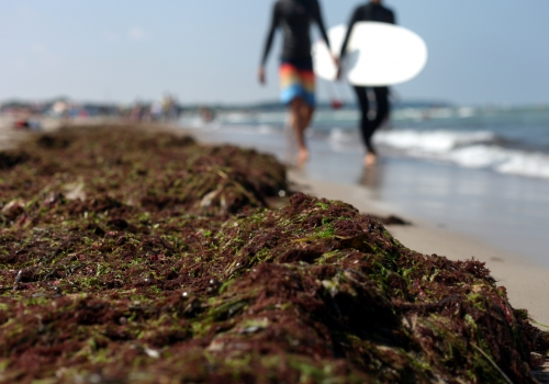 Algen am Strand, über dts Nachrichtenagentur