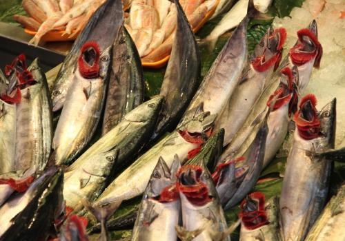 Fische, über dts Nachrichtenagentur