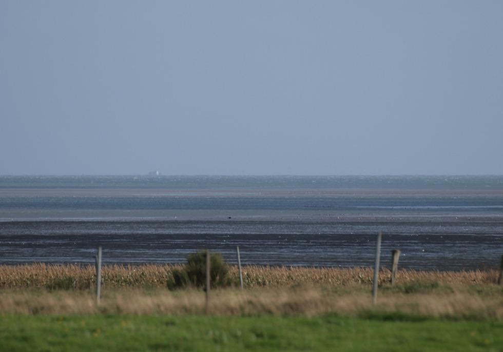 Das Wattenmeer an der Nordsee, über dts Nachrichtenagentur